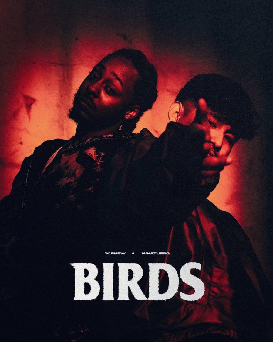 BIRDS_1kphew_Whatsuprg